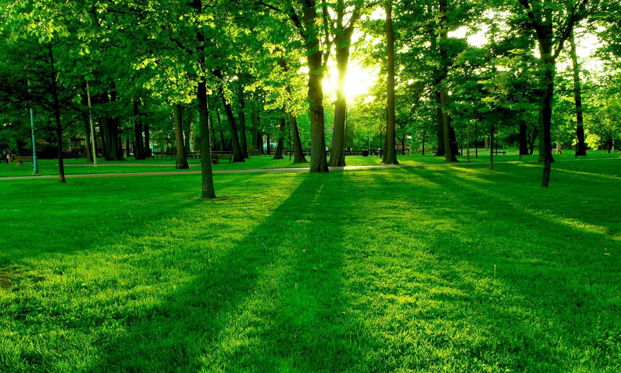 How do I plan a green burial?